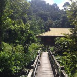 BORNEO - RAINFOREST LODGE