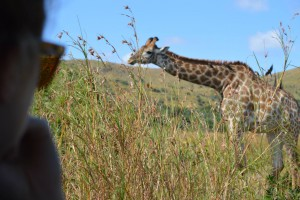 Game Drive - Afrika - Tansania - Kenia