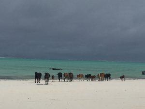 Paje - Sansibar