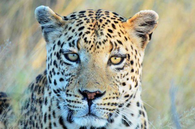 Luxussafari Afrika